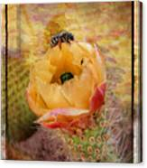 Cactus Spring Beauty W Frame Canvas Print