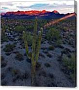 Cactus Sun Beam Canvas Print