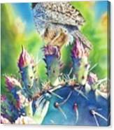 Cactus Wren Canvas Print