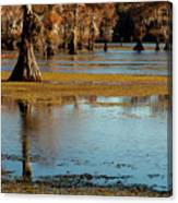 Caddo Lake 2016 Canvas Print