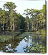 Caddo Lake Canvas Print