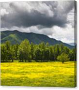 Cades Cove Great Smoky Mountains National Park Tn - Fields Of Gold Canvas Print