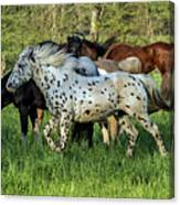 Cades Cove Horses Canvas Print