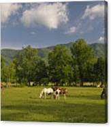 Cades Cove Horses In Smoky Mountains Tennessee Usa Canvas Print