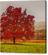 Cades Tree After The Rain Canvas Print