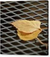 Caged Leaf Canvas Print