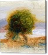 Cagnes Landscape 1910 Canvas Print