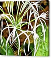 Cahaba Lily In Huntington Botanical Gardens In San Marino-california Canvas Print