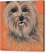 Cairn Terrier Canvas Print