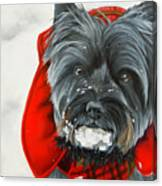 Cairn Terrier In The Snow Canvas Print