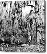 Cajuns Collecting Moss Canvas Print