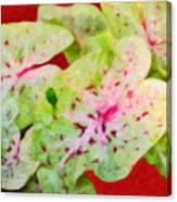 Caladiums Canvas Print