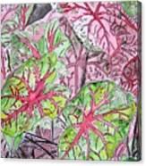 Caladiums Tropical Plant Art Canvas Print