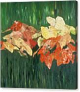 Caldium Forest Canvas Print