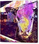 Calf Cow Maverick Farm Animal Farm  Canvas Print