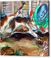 Calf Roping Canvas Print