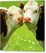Calfs Canvas Print