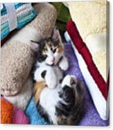 Calico Kitten On Towels Canvas Print