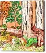 Calif. Redwoods Canvas Print