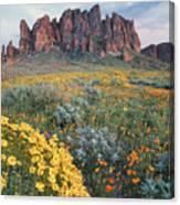 California Brittlebush Lost Dutchman Canvas Print