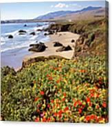 California Coast Wildflowers Vertical Format Canvas Print