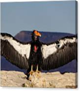 California Condor Canvas Print
