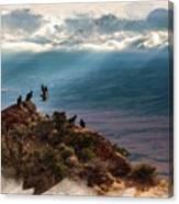 California Condors Canvas Print
