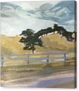 California East Bay Oaks Canvas Print