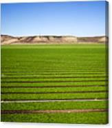 California Farm 14pdxl069 Canvas Print