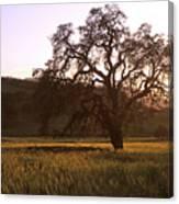 California Hwy 25 Oak Canvas Print