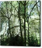 California Jungle Canvas Print