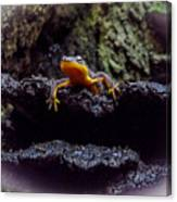 California Newt 2 Canvas Print