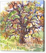 California Oak In Winter Canvas Print