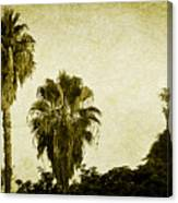 California Palms Canvas Print