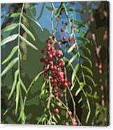 California Pepper Tree Leaves Berries Abstract Canvas Print