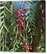 California Pepper Tree Leaves Berries I Canvas Print