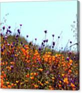 California Poppies And Wildflowers Canvas Print