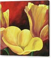 California Poppies Iv Canvas Print