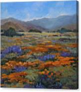 California Poppies Canvas Print