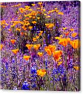 California Poppy And Lupin Canvas Print