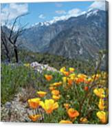 California Poppy And Mountain Panorama Canvas Print