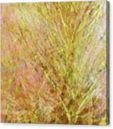 California Spring Canvas Print