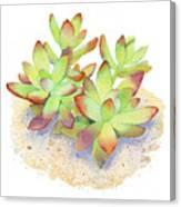 California Sunset Succulent Canvas Print