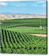 California Vineyards 1 Canvas Print