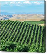 California Vineyards 2 Canvas Print