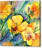 California's Poppies Canvas Print