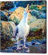 Call Of The Gull Canvas Print