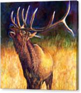 Call Of The Wild Elk Canvas Print