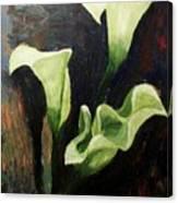 Calla Lilies Canvas Print