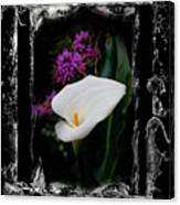 Calla Lily Splash Canvas Print
